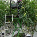 Do pielęgnacji roślin wykorzystywane są wózki automatyczne z firmy Precimet