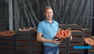 Piotr Lis z Ociąża nastawia się na uprawę pomidorów malinowych