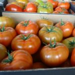 Pomidory malinowe Rapanui F1