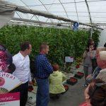 Promocja odmiany pomidora malinowego Mei Shuai F1 podczas dnia otwartego w miejscowości Kłodka