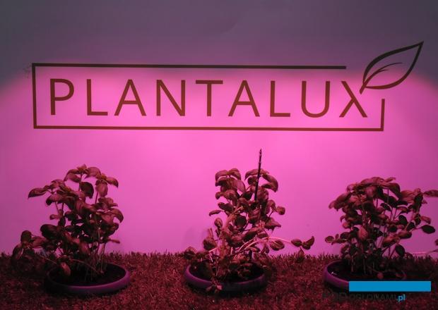 Demonstracyjna instalacja firmy Plantalux podczas targów TSW