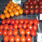 Pomidory koktajlowe o różnych kolorach owoców z firmy Yuksel Tohum, P. Bucki