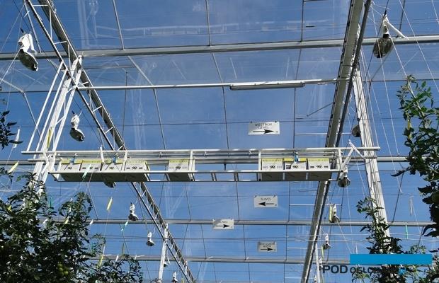 W Holandii w doświetlanych uprawach ule umieszcza się czasem nad roślinami - aby owady te miału zapewniony dostęp do naturalnego promieniowania, zawierającego niezbędne im do orientacji w przestrzeni promieniowanie UV