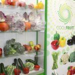 Ekspozycja firmy Europapryka, zajmującej się skupem i sprzedażą warzyw
