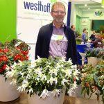 Manfred Mehring-Lemper z firmy Westhoff_Begonia boliviensisShineBrightWhite