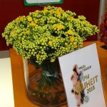 Kalanchoe_Queen® CutFlowers 'Smiling Yellow Meadow