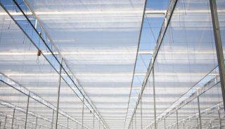 Kurtyny termoizolacyjne firmy Ridder Climate Screens zainstalowane w istniejącym wcześniej kompleksie szklarniowym