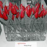 """Tulipany odmiany 'Hong Kong"""""""