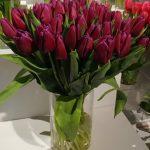 Tulipan odmiany 'Laptop'