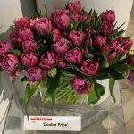 Tulipan odmiany 'Double Prince'
