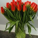 """Tulipan odmiany """"Strong Fire"""""""
