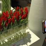 Tulipany odmiany Hong Kong prezentowane w wysokim, szklanym naczyniu zwracały uwagę wielu zwiedzających, znalazły się na niejednej fotografii z wystawy