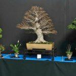 Jednym z ciekawszych akcentów targów była wystawa bonsai