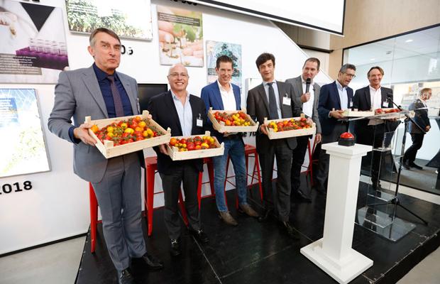 Pracownicy firmy De Ruiter prezentują owoce odmian pomidorów z portfolio firmy, fot. De Ruiter