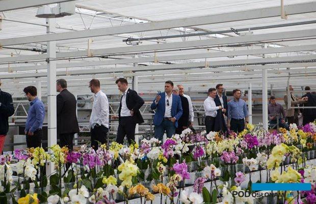 Wizyta w szklarni z produkcją storczyków z rodzaju Phalaenopsis w Stężycy