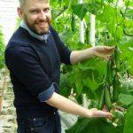 Marcin Piechota prezentuje dorastające owoce ogórka Quintus F1, specjalista podkreśla ich dobre wyrównanie i wysoką jakośc