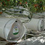 W Agrokulturze w tym sezonie uruchomiono szklarnię typu ultraclima, zbudowaną przez firmę Richel, powietrze o odpowiednich parametrach jest rozprowadzane przez perforowane rękawy foliowe umieszczone pod rynnami uprawowymi