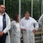 Katarzyna Grabka - hodowca pomidorów, Sławomir Mechacki, Maciej Bigda