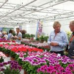 _Hendriks Young Plants_FlowerTrials 2018_