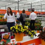 Carolien van der Goes_Dummen-Orange_FlowerTrials-2018