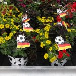 FlowerTrials 2018_ConfettiGarden_WorldCup_Dummen-Orange