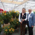 Tomasz-Michalik_Karol-Pawlak_Vitroflora_FlowerTrials-2018_ słonecznik 'Sunbelieveable' z firmy Thompson & Morgan