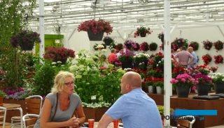 FlowerTrials® to miejsce prezentacji nowych odmian oraz okazja do spotkań ze specjalistami z kilkudziesiećiu firm_Syngenta FloriPro Services_2017
