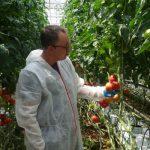 Informacje o nowej odmianie pomidora malinowego przekazywał Rafał Alfut z firmy Syngenta
