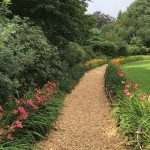 Jeden z zakątków Arboretum Wojsławice - z liliowcami