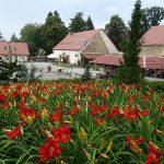 Hemerocallis_Genowefa_dziedziniec-Arboretum-w-Wojslawicach
