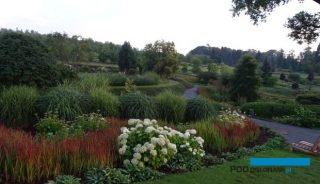Arboretum w Wojslawicach_lipiec-2018