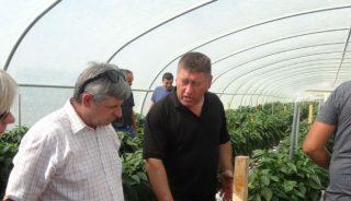 Informacji na temat uprawy udzielał właściciel plantacji - Tadeusz Zalewski