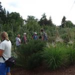 ISU Awards_testy w Arboretum Wojslawice