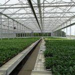 Vitroflora_nowy-tunel-Farmer