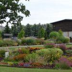 Kolekcje Vitroflory są stale wzbogacane o nowe gatunki i odmiany bylin