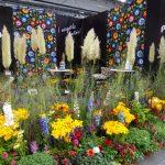 Ekspozycja firmy Panek, specjalizującej się w produkcji bylin (i roślin sezonowych
