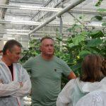 Pan Rafał Bunk z Grudziądza kontynuuje rodzinne tradycje ogrodnicze, zajmuje się uprawą ogórków…
