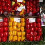 Bardzo duży wybór odmian papryki, oberżyny, cukinii - to tylko część oferty firmy Toma Seeds