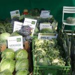 Firma Enza Zaden prezentowała głównie odmiany warzyw kapustnych