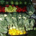Warzywa kapustne i papryka na stoisku firmy Syngenta
