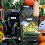 Firma HM. Clause zaprezentowała szeroki asortyment gatunków i odmian warzyw