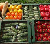 Ciekawostką były warzywa oferowane przez gospodarstwo ogrodnicze Edgara Latały