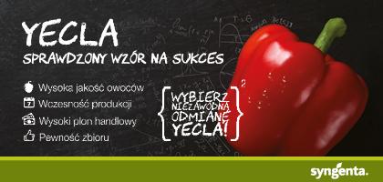 Papryka Yecla - Syngenta