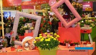 Migawka z targów IPM Essen 2019, któe poprzedzają wiosenny sezon z branży ogrodniczej, fot. A. Cecot