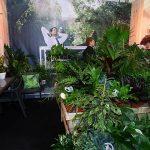 Modelowy kącik w centrum ogrodniczym, zwracający uwagę na dobroczynny wpływ roślin pokojowych na kondycję ludzi przebywających we wnętrzach_IPM Essen 2019