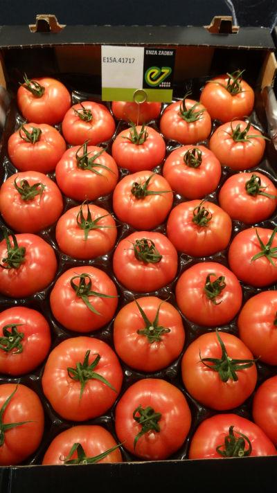 Pod numerem E15A.41717 (obecnie odmiana otrzymała juz nazwę Enroza) na stoisku firmy Enza Zaden prezentowano pomidory malinowe z polskiej uprawy z doświetlaniem asymilacyjnym