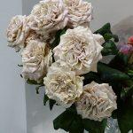 Róża Westminster Abbey ze stoiska firmy Gambin Fiori_Myplant and Garden 2019