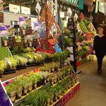 Szeroka oferta atrakcyjnie prezentowanych ziół spółki Vigo Gerolamo_Myplant and Garden 2019