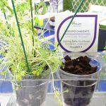 LITE CUBES - produkt wyróżniony w konkursie nowości targów Myplant & Garden 2019