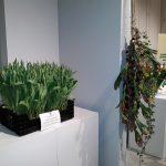 Wystawa Tulipanów w Wilanowie w 2018 r. (fot. D. Sochacki)